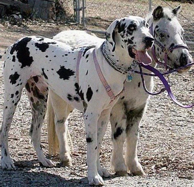 Собаки и кошки похожие на другие вещи как две капли воды