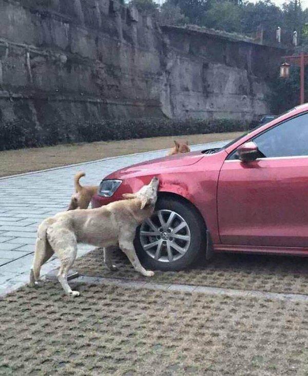 Водитель пнул бездомного пса, а когда вернулся был в ужасе!