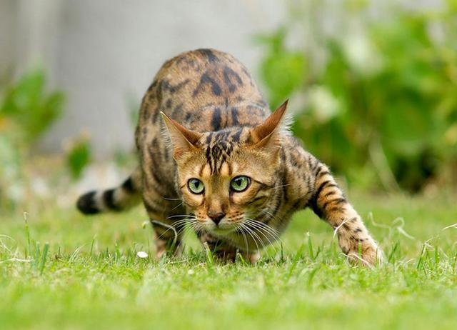 Усатые модели. Как правильно фотографировать кошек