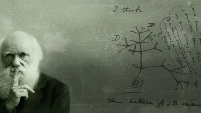 Ученые создали уникальное по масштабу «Древо жизни»