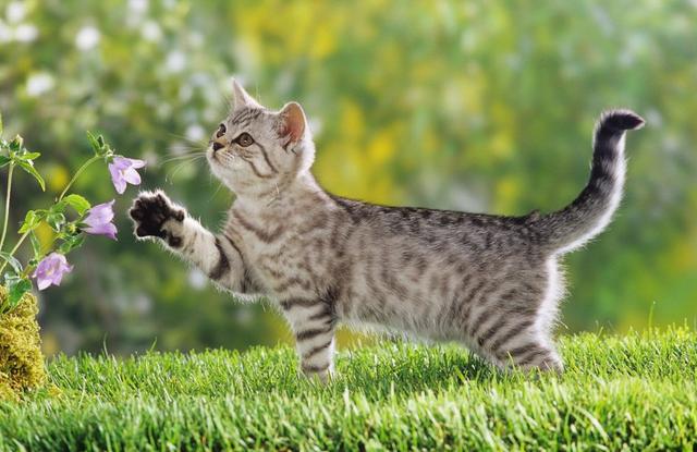 Как помочь коту пережить кастрацию