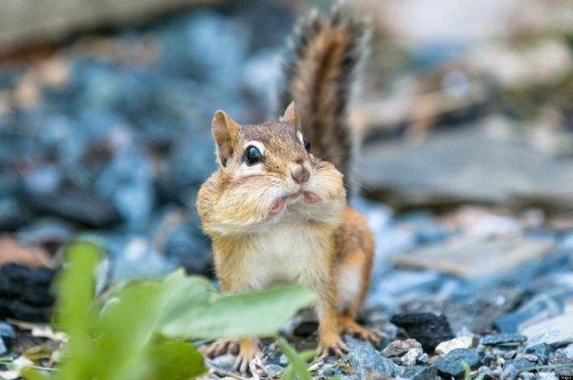 Животные, которые чему-то очень удивились (23 фото)