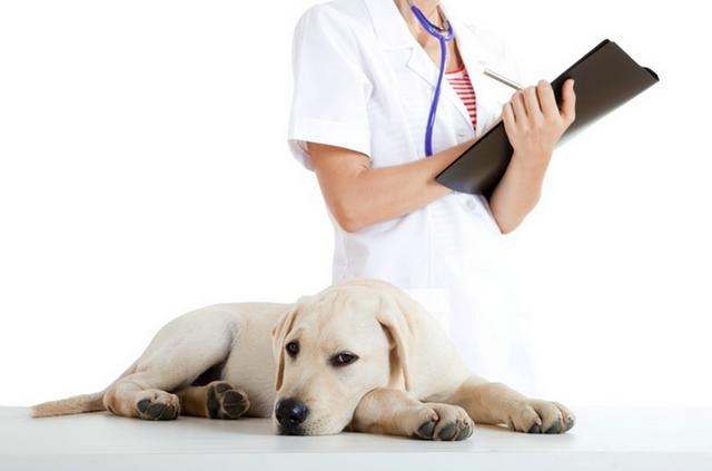 Глистогонное для собак: что нужно знать владельцу