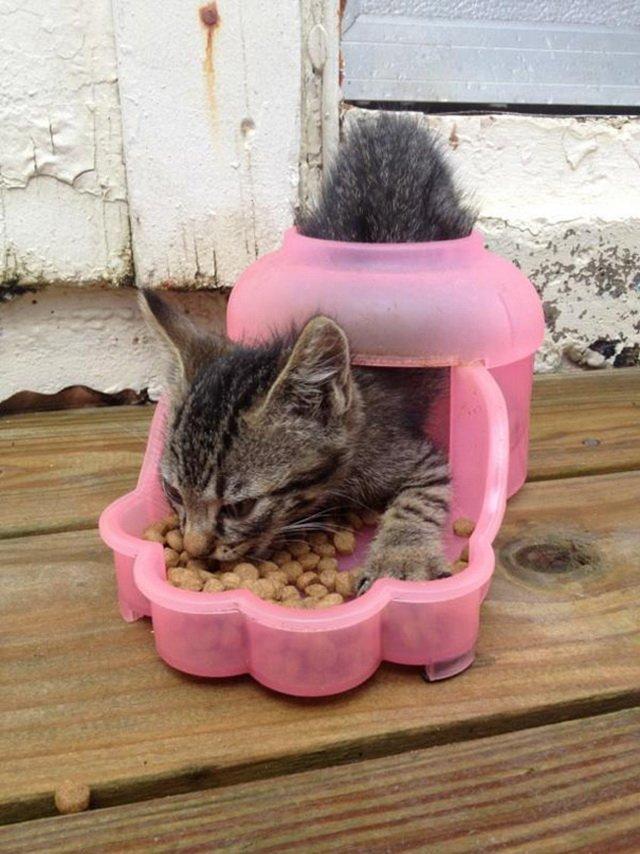 Кошачья логика (17 фото)