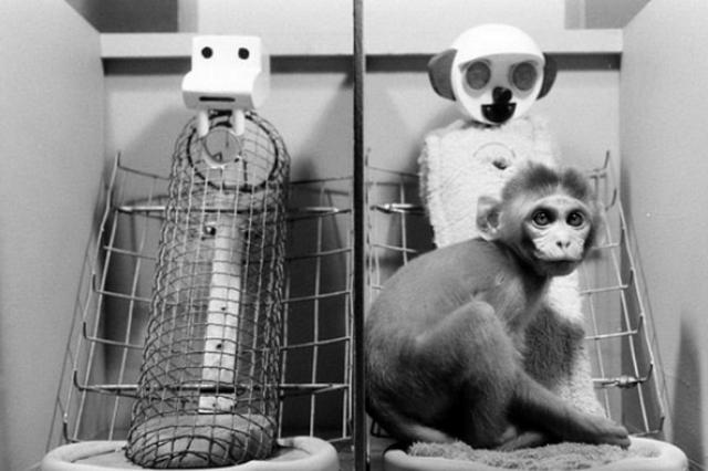 5 шокирующих экспериментов над животными
