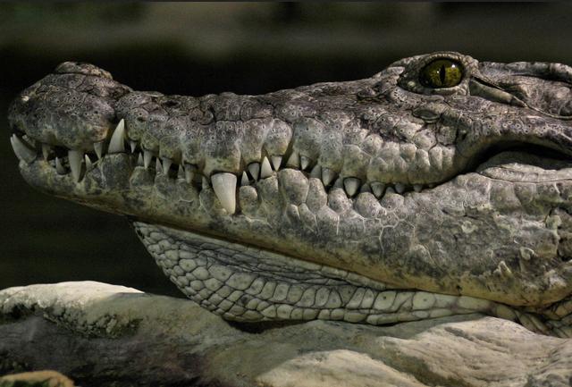 Ровестники динозавров: 10 древнейших животных, которые сохранились по сей день