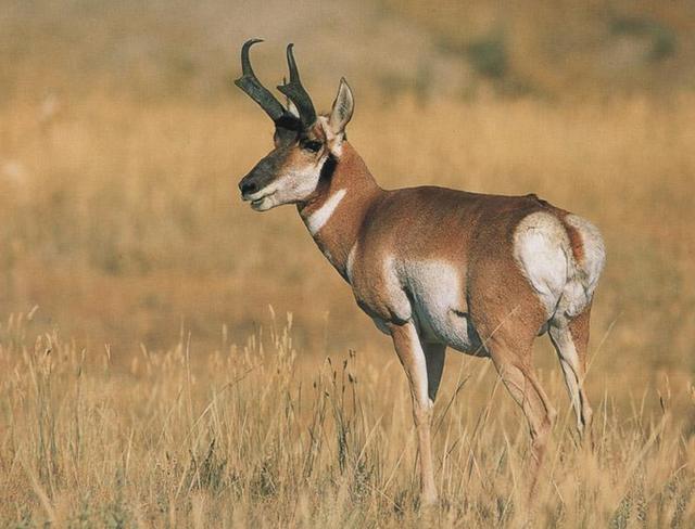 Топ 10: Самые быстрые сухопутные животные