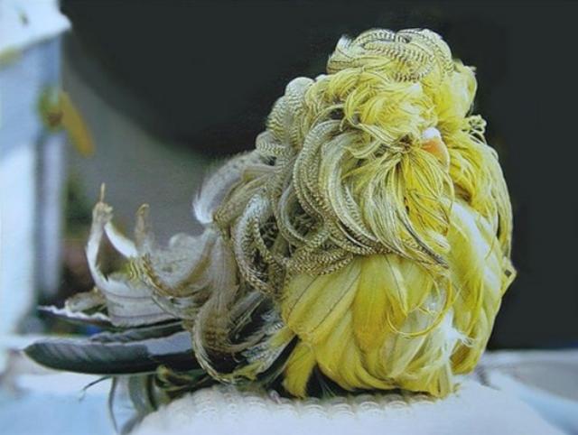 Интересные факты о волнистых попугайчиках