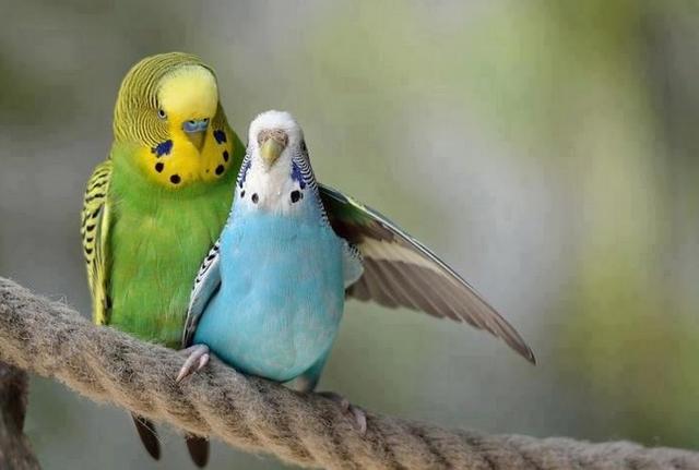 звуки птиц слушать онлайн