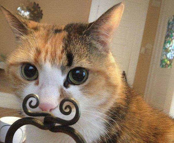 Замурчательные кадры с кошками, сделанные в нужный момент