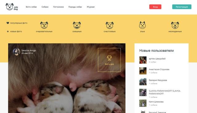 «Лайф Дог» - социальная сеть для владельцев животных