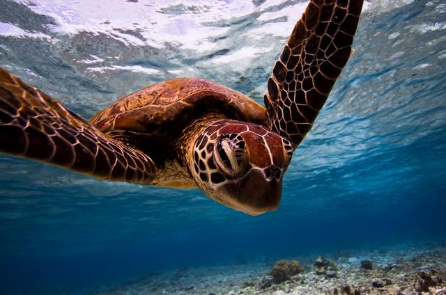 Лучшие снимки конкурса Зоологического общества Лондона 2015