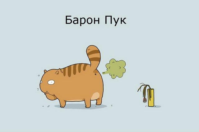 12 типов кошек