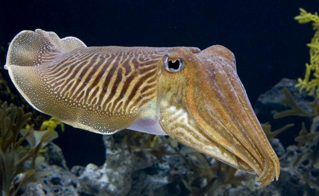 Самые необычные формы зрачков у животных