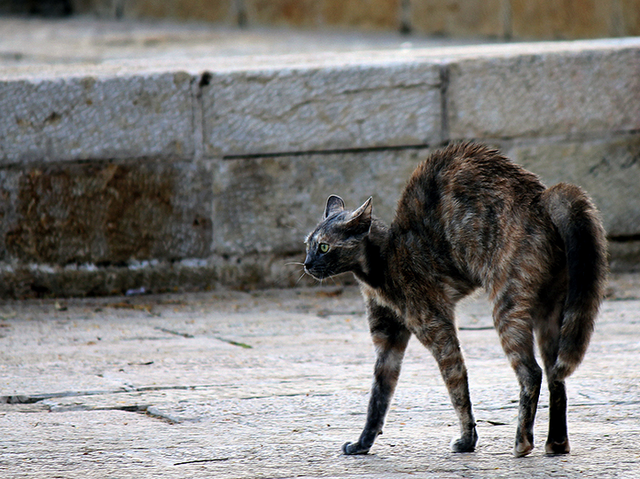 Агрессия у кошек: причины появления, симптомы и решение проблемы