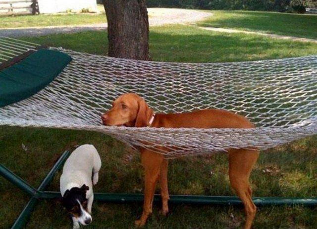 Собаки и кошки, котрые не ожидали такого поворота событий