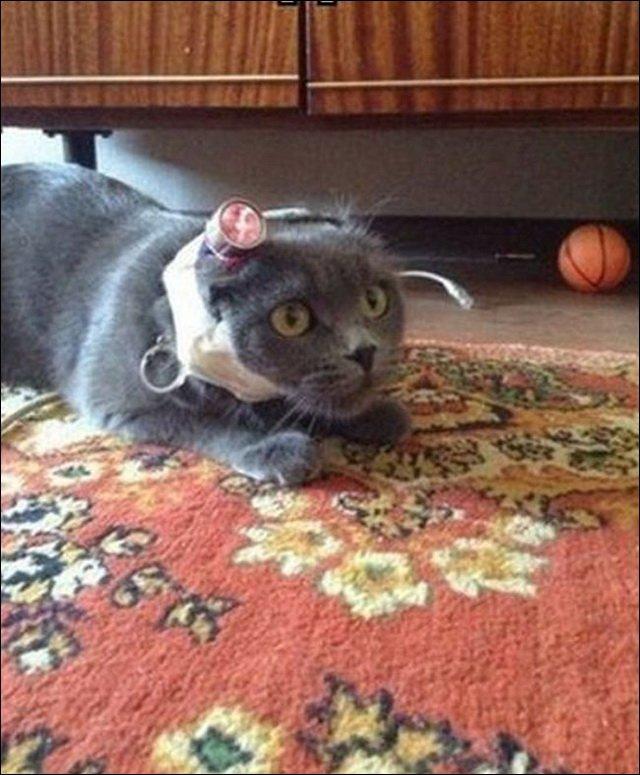 Как потроллить и озадачить кота на некоторое время