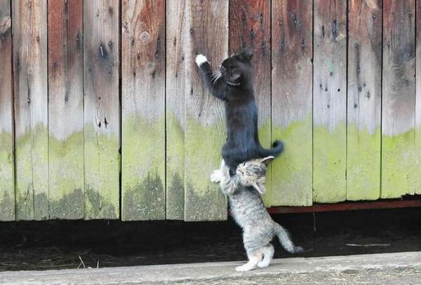 Чему нам стоит поучиться у кошек