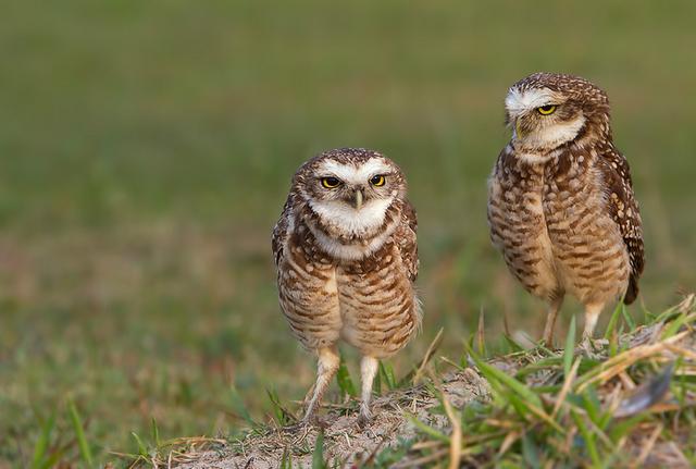 Необычные способы защиты у птиц