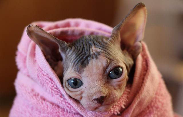 Уход за кожей у кошек