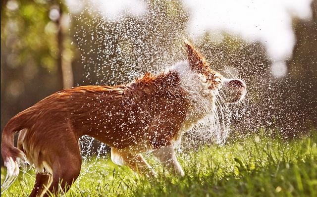 Зачем измеряют скорость встряхивания мокрых животных?