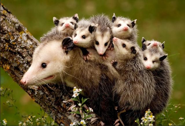 10 самых зубастых животных