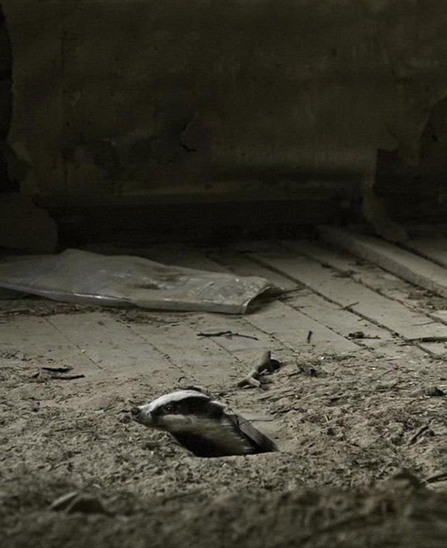 Дикие звери в финских лесах заняли брошенные дома