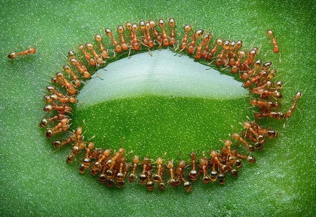 10 интересных фактов о жизни муравьиной колонии