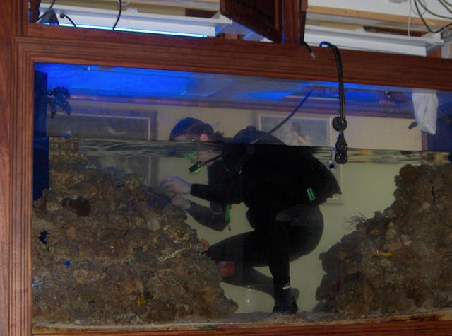 Запуск аквариума: как все сделать правильно