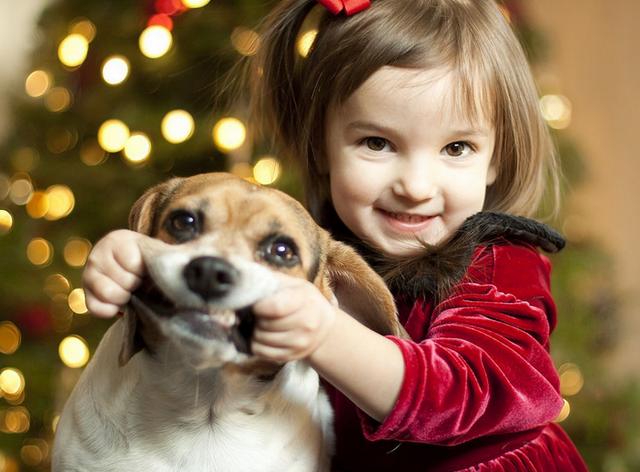 Ребенок просит собаку: когда стоит сказать «да» и какую породу выбрать