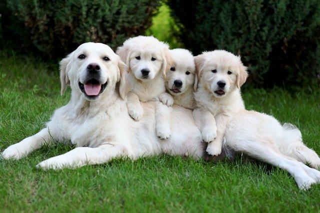 Что такое вакцинация собак и зачем она нужна?