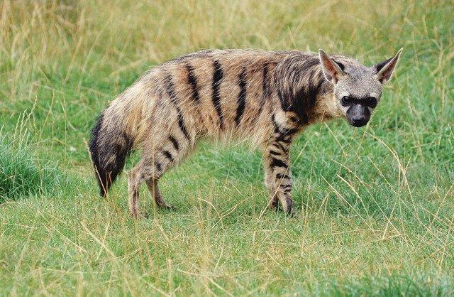 Редкие и необычные животные планеты
