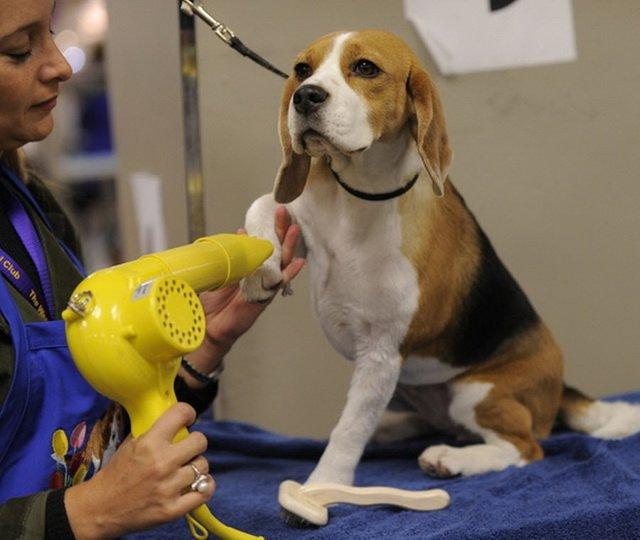 Зачем ходить на выставки собак