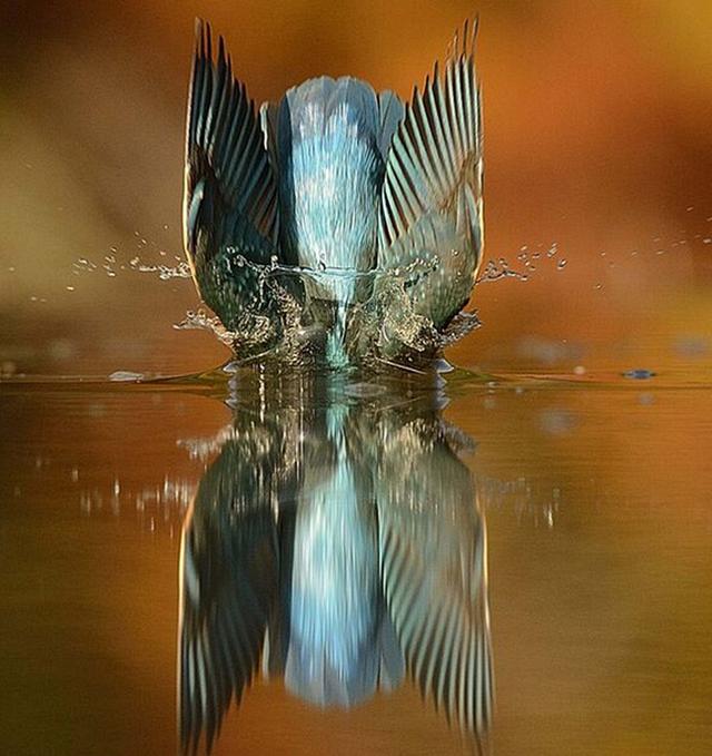 Идеальный снимок зимородка после 6 лет стараний