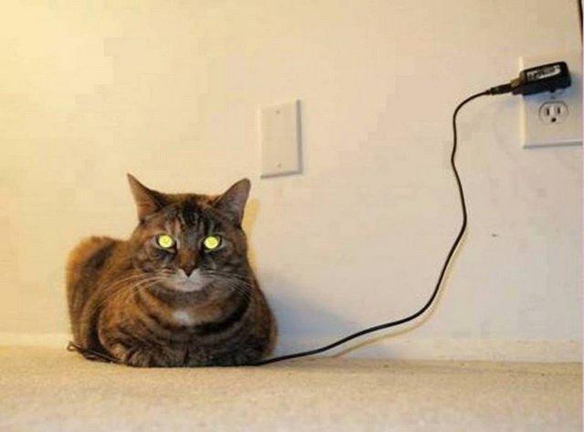 Почему у кошек в темноте светятся глаза