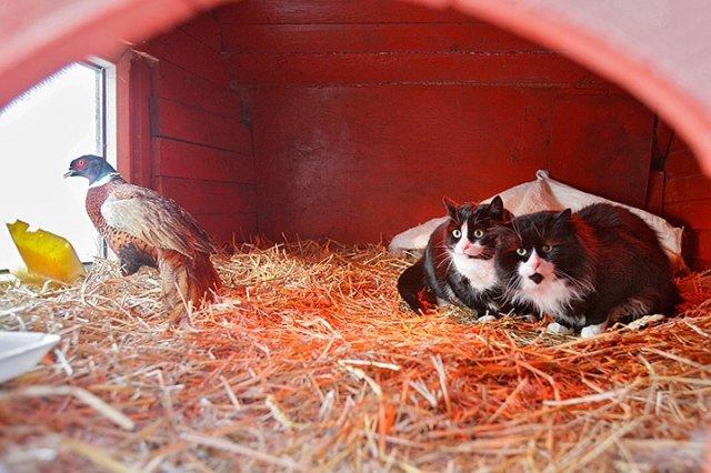 Животные в поисках теплого местечка