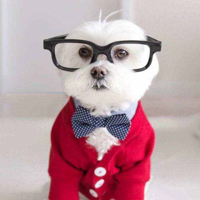 Стильный пес-хипстер покоряет Instagram