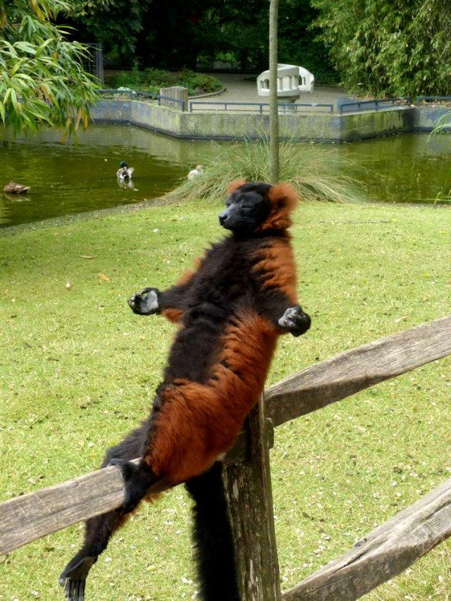 Забавные и смешные животные (22 фото)