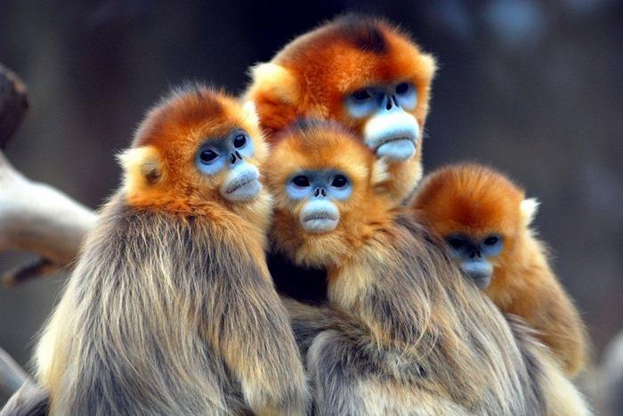 Самые сексеуальные обезьяны