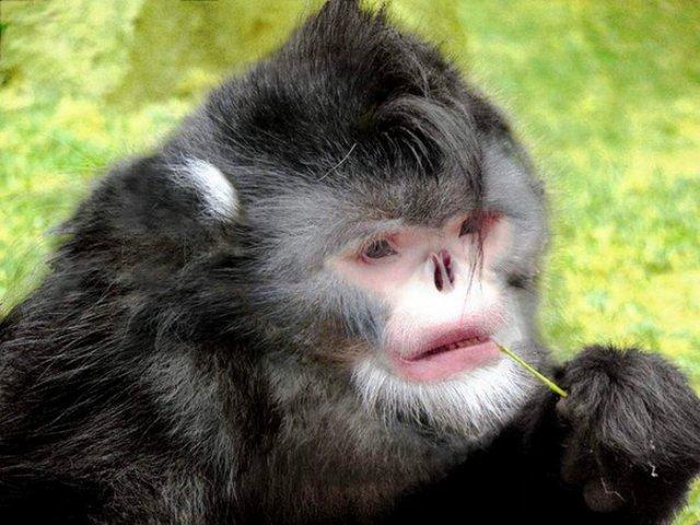 Редкие и необычные виды обезьян