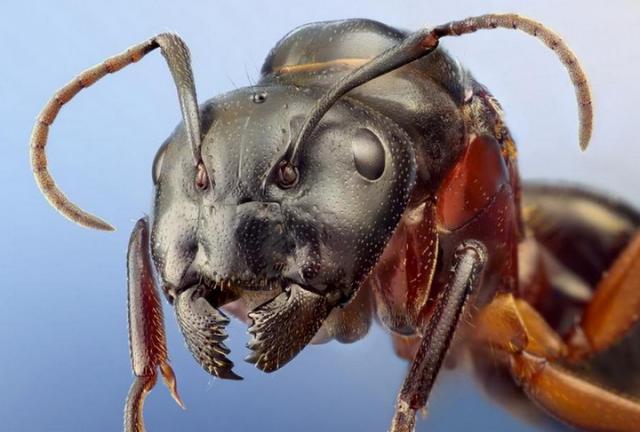 Удивительные макропортреты обычных насекомых