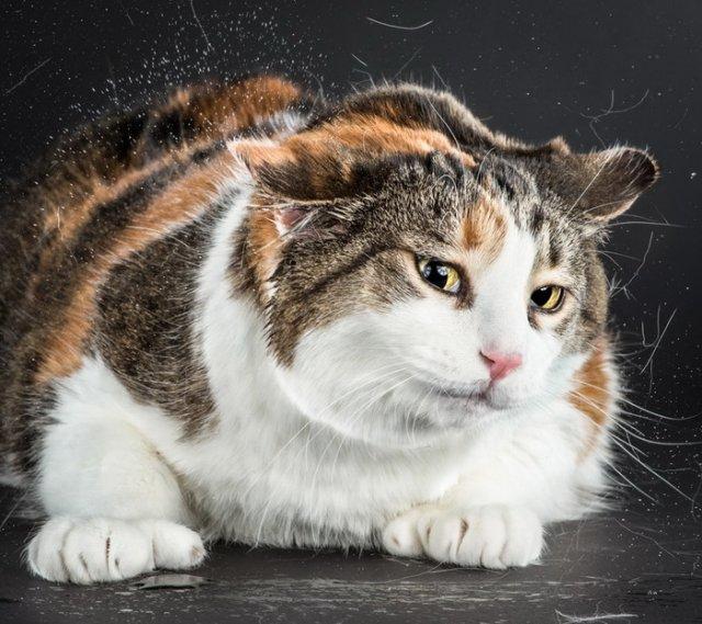 Забавные коты в проекте Карли Дэвидсона «Отряхивающиеся Коты» (Shake Cats)