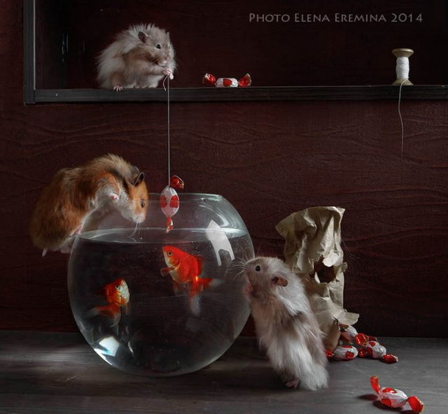 «Тайная жизнь и приключения хомячков» — арт-проект Елены Ереминой