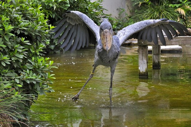 Ноги птицы