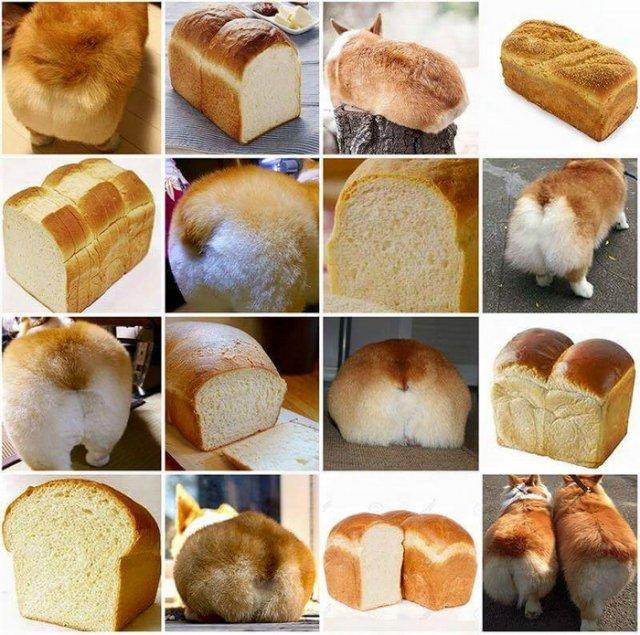 Щенки похожие на булочки и другие невероятные сходства