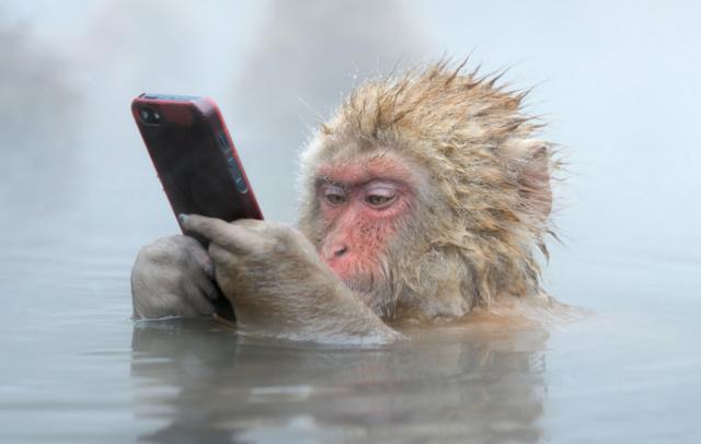 Как обезьяны получили свои названия