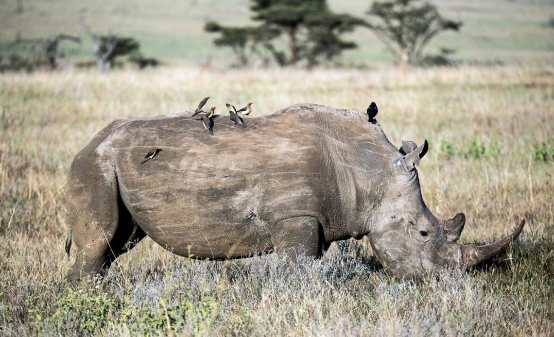 Самые тяжелые животные в мире