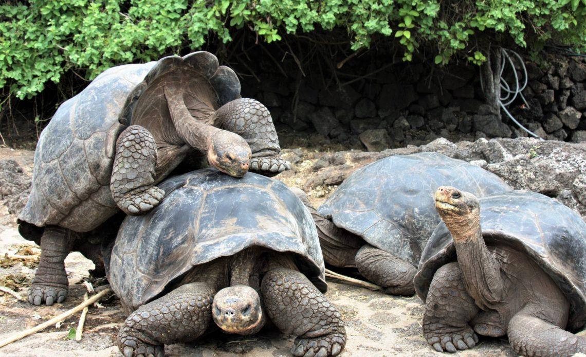 Самые долгоживущие животные в мире