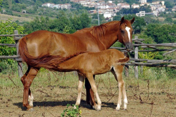Крестьянская лошадь