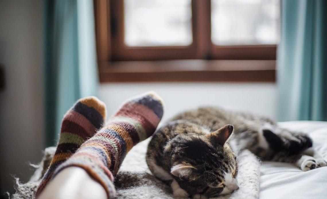 Почему мой кот спит у меня в ногах?